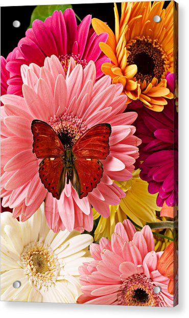 Red Butterfly On Bunch Of Flowers Acrylic Print