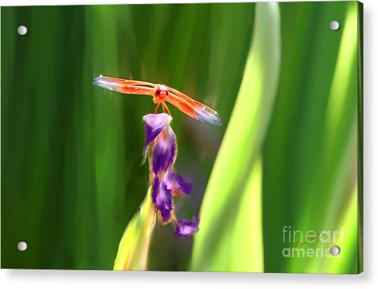 Red Dragonfly On Purple Flower Acrylic Print