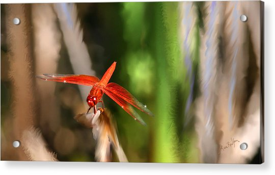 Red Heart Dragonfly Acrylic Print