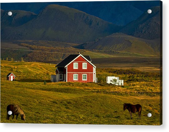 Red House And Horses - Iceland Acrylic Print