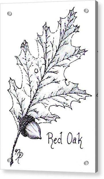 Red Oak Leaf And Acorn Acrylic Print