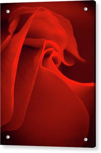 Red Rose Macro Acrylic Print
