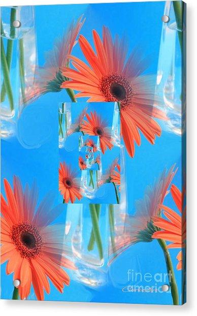 Redundant Gerbera Daisy Acrylic Print