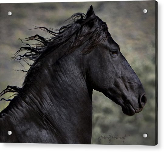 Regal Acrylic Print