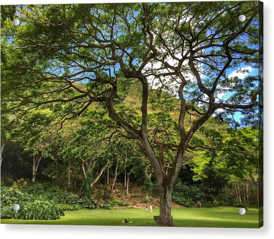 Relaxing Under The Tree Acrylic Print