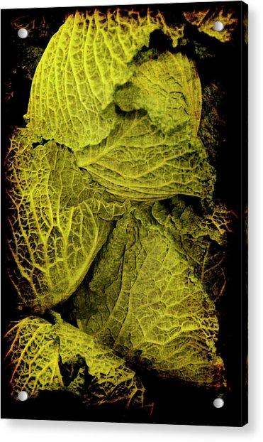 Renaissance Chinese Cabbage Acrylic Print