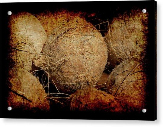 Renaissance Coconut Acrylic Print
