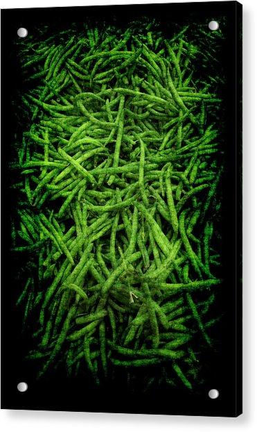 Renaissance Green Beans Acrylic Print