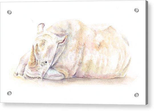 Rhino One Acrylic Print