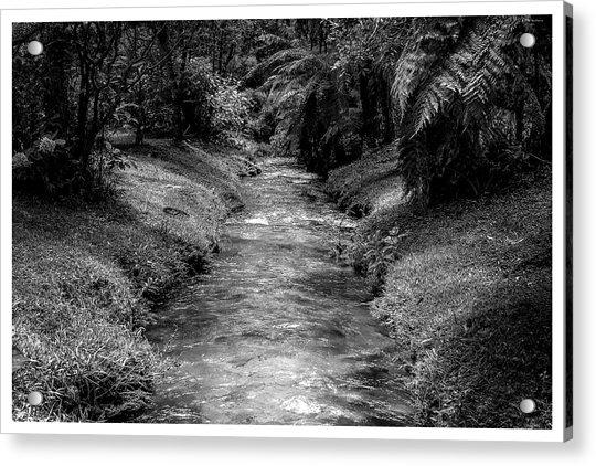 Riacho-horto-parque Estadual-campos Do Jordao-sp Acrylic Print