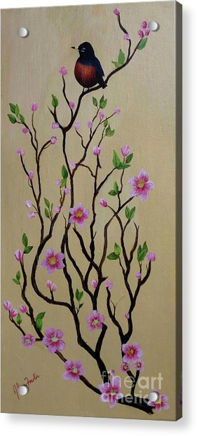 Robin And Spring Blossoms Acrylic Print