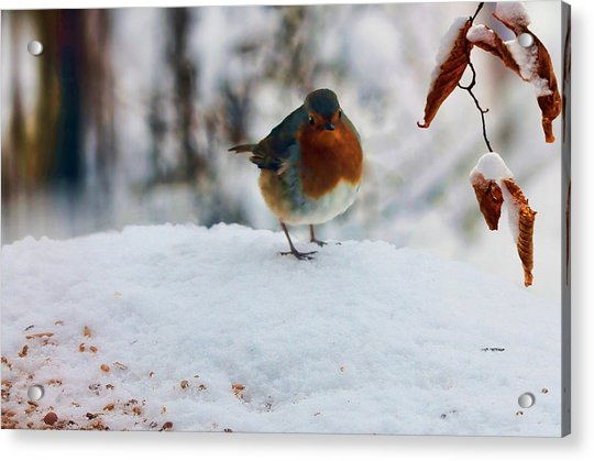 Acrylic Print featuring the photograph Robin Redbreast by Valerie Anne Kelly