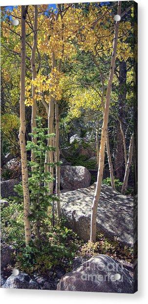 Rock Garden 2 Acrylic Print