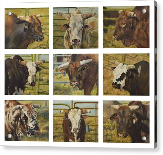 Rodeo Royalty Acrylic Print