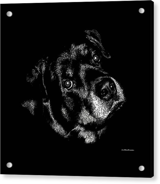 Rottweiler Mozart Portrait Acrylic Print