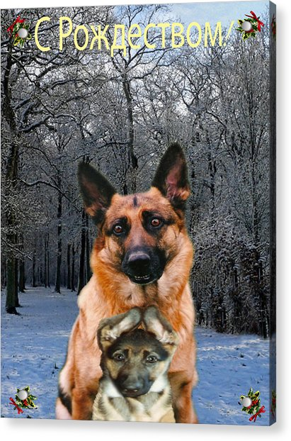 Russian Holiday German Shepherd And Puppy Acrylic Print