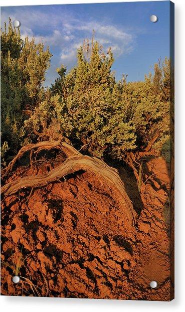 Sagebrush At Sunset Acrylic Print