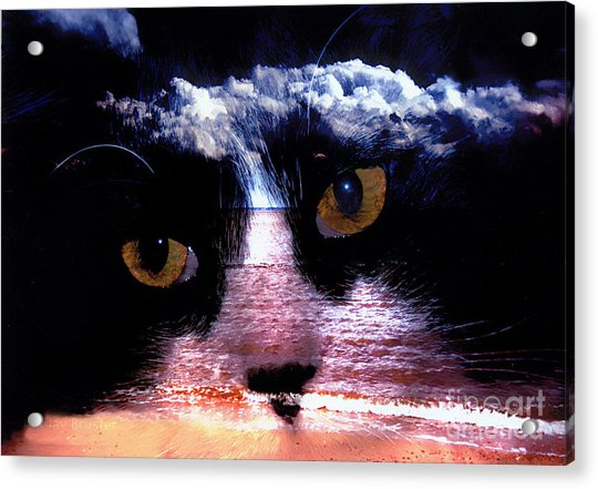 Sandy Paws Acrylic Print