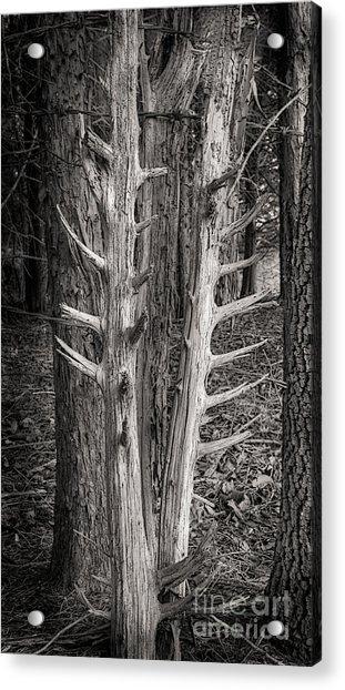 Scotopic Vision 4 - Trees Acrylic Print