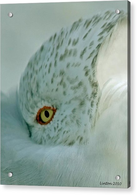 Sea Gull On A Windy Morning Acrylic Print