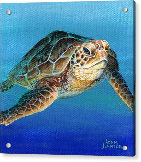 Sea Turtle 1 Of 3 Acrylic Print