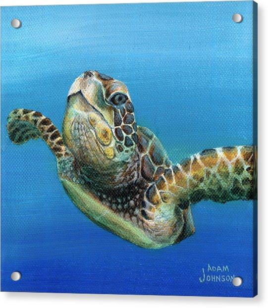 Sea Turtle 3 Of 3 Acrylic Print