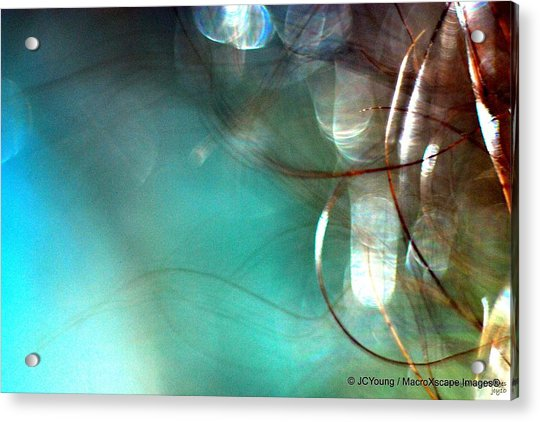 Sea World Acrylic Print by JCYoung MacroXscape