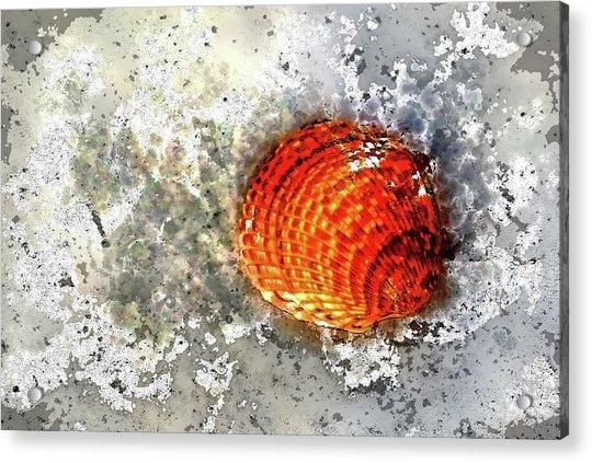 Seashell Art  Acrylic Print