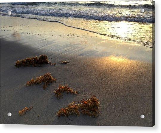 Seaweed Glow Acrylic Print