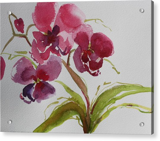 Selby Orchid II Acrylic Print