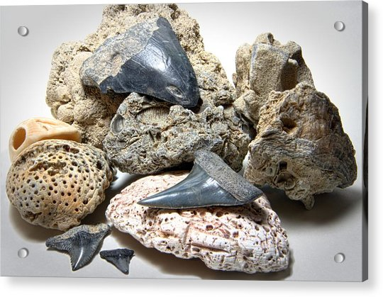 Sharks Teeth And Coral Acrylic Print