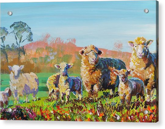 Sheep And Lambs In Devon Landscape Bright Colors Acrylic Print