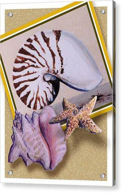 Shell Collage Acrylic Print