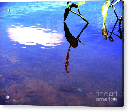 Silhouette Aquatic Fish Acrylic Print