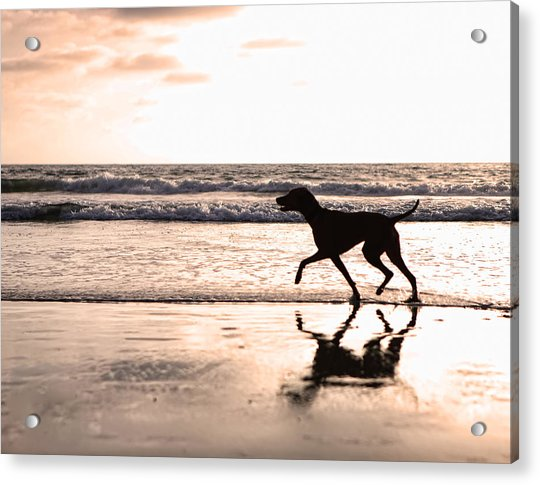 Silhouette Of Dog On Beach At Sunset Acrylic Print
