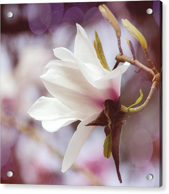 Single White Magnolia Acrylic Print