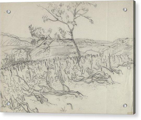Sketch Of Vineyard Acrylic Print