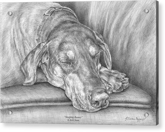 Sleeping Beauty - Doberman Pinscher Dog Art Print Acrylic Print