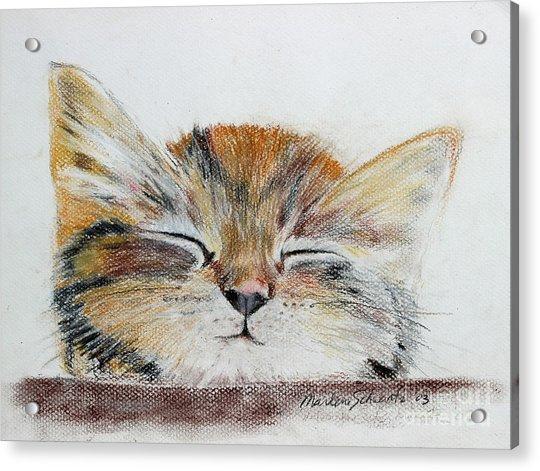 Sleepyhead Acrylic Print
