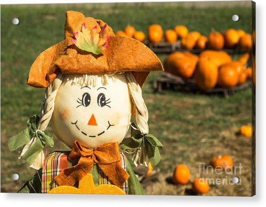Smiling Scarecrow With Pumpkins Acrylic Print