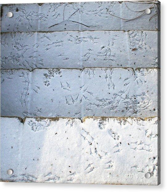 Snow Bird Tracks Acrylic Print