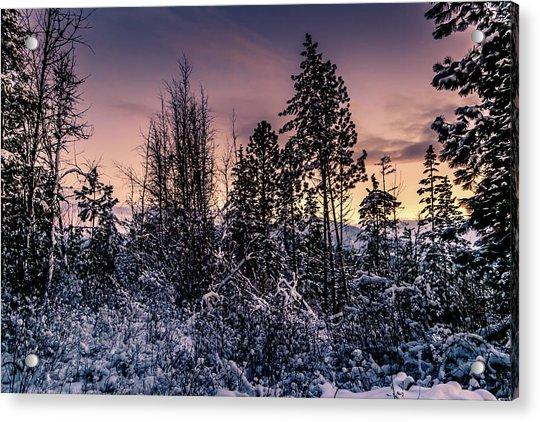 Snow Covered Pine Trees Acrylic Print