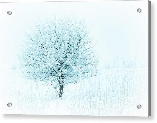 Snow Field Tree Acrylic Print