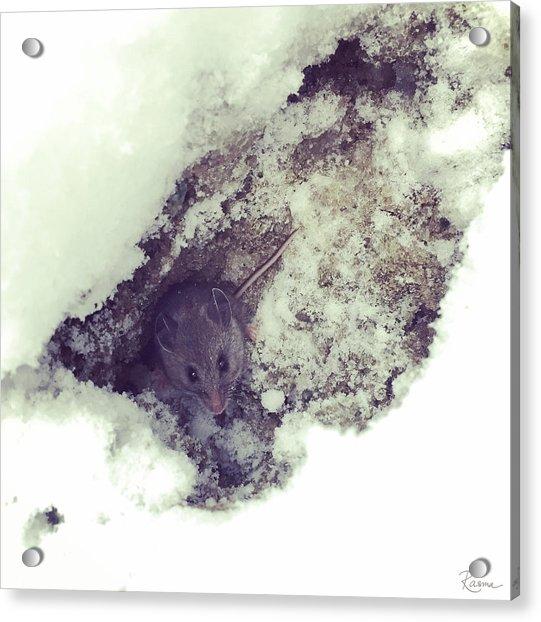 Snow Mouse Acrylic Print