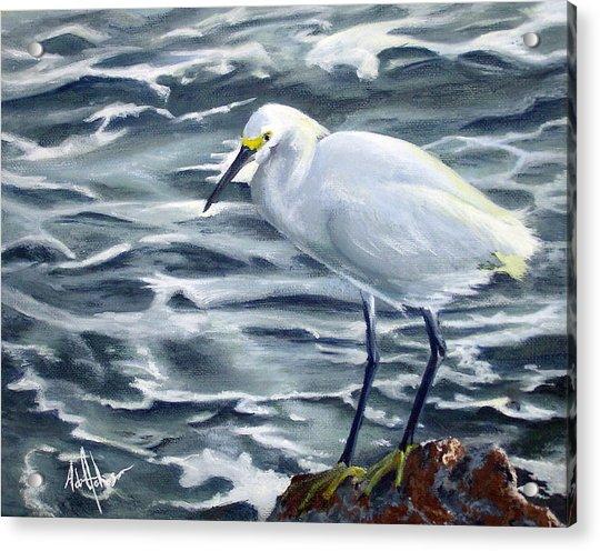 Snowy Egret On Jetty Rock Acrylic Print