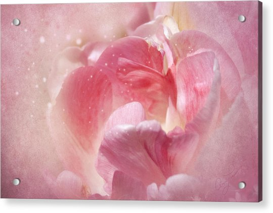 Soft Pink Tulips Acrylic Print