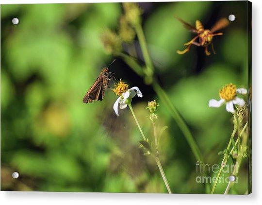 Some Kind Of Skipper Acrylic Print
