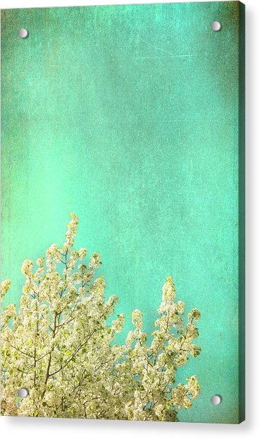 Something Special Acrylic Print