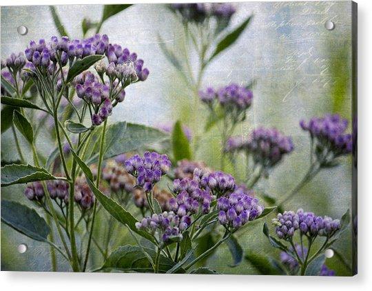 Sophies Garden Acrylic Print