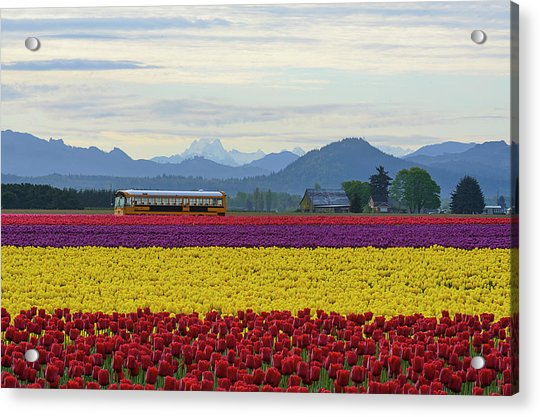 Spring In Skagit Valley Acrylic Print